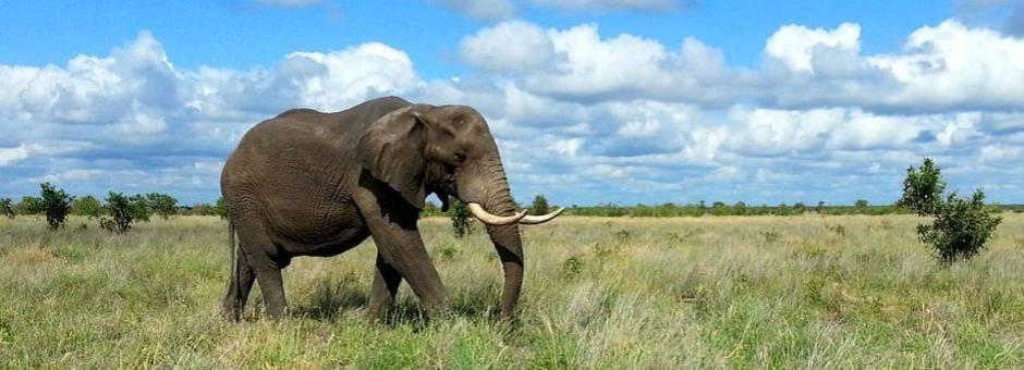 Zuid-Afrika-Krugerpark-Olifant1_1_371272