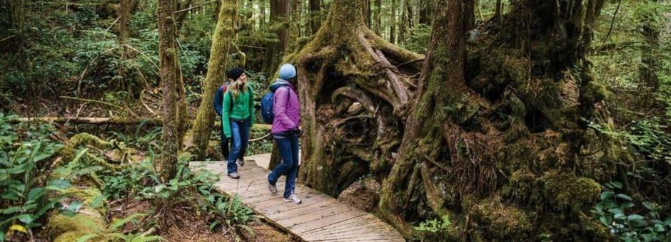 Canada-Ucluelet-wandelen-bomen