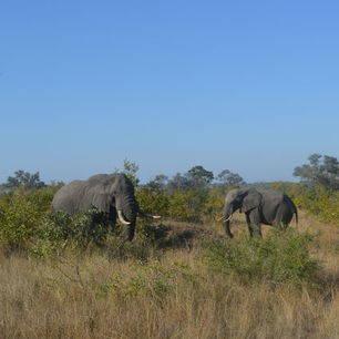 Krugerpark wildleven (4)
