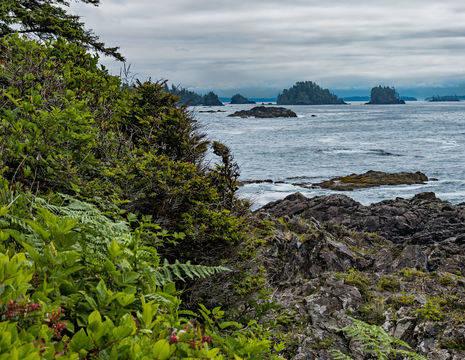 Canada-Vancouver-Island-Ucluelet-1_1_503625
