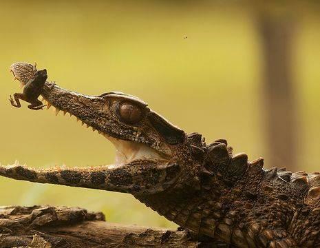 Dieren in de Amazone