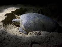 Schildpadden zoeken