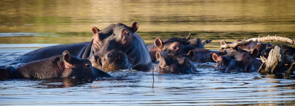 Zuid-Afrika-Timbavati-wildresveraat_2_305486