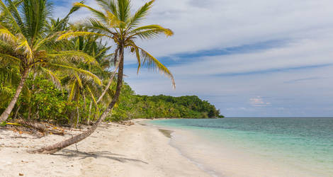 Cahuita-strand-palmboom