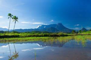 Kota Kinabalu, Prachtige natuur Mount Kinabalu Park