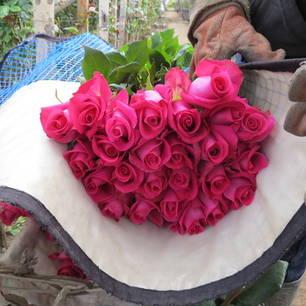 kleurrijke rozenplantages in Cayambe