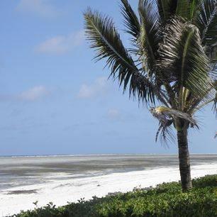 Tanzania-Zanzibar-Palmboom_1_375934
