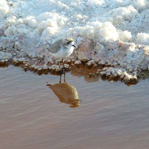 Chili-San-Pedro-de-Atacama-zoutcristallen-vogel