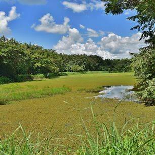 Colombia-Los-Llanos-moerasgebied_1_486145