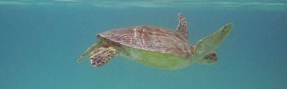 Gili-eilanden snorkelen