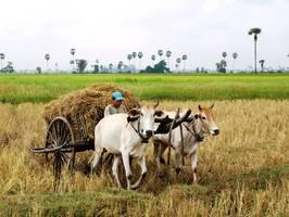 Het lokale leven van de Bunong