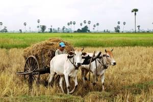 Het lokale leven van de Bunong-stam