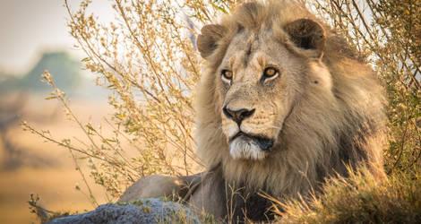Moremi-Wildlife-Reserve30