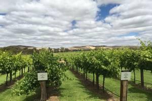 Food & Wine tour in de Barossa Valley