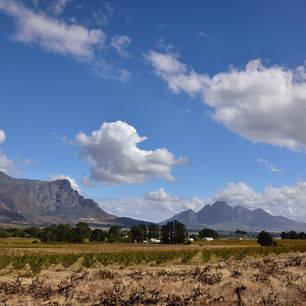 Zuid-Afrika-Franschhoek-Wijnvelden2