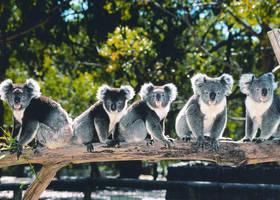 Zuidkust Australie