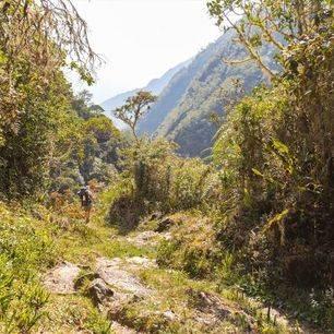 Jungle-El-Choro-Trekking-Bolivia
