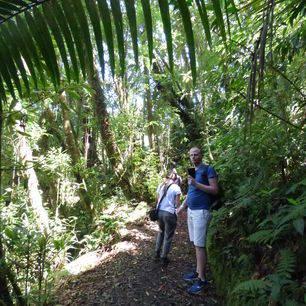 Panama-Boquete-vogelspot_4_358061