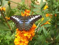 Ubud: Vogels-en vlinderswandeling