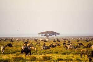 Rondreizen Tanzania