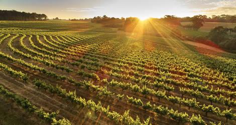 Australie-Wijngaarden