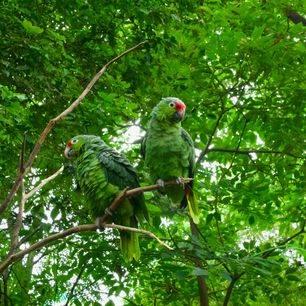 Ecuador-Amazone-papepaai