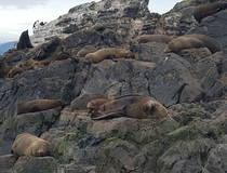 Snorkelen met zeeleeuwen