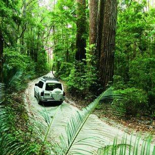 Australie-Fraser-Island-jungle-jeep