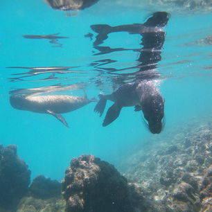 snorkel samen met speelse zeeleeuwen op Isabela