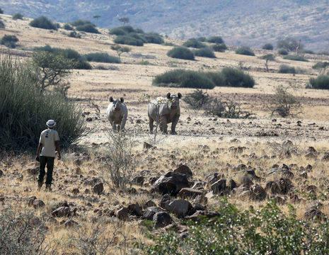 Namibie-Palmwag-Rhino-Trekking(8)