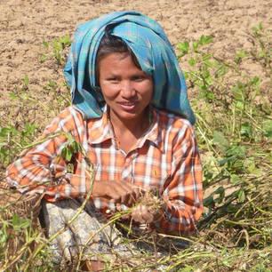 Myanmar-Bagan-vrouw in veld(8)