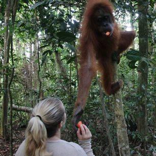 Sumatra1