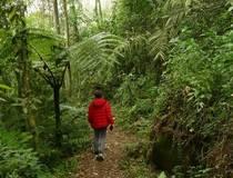 Chicaque trekking
