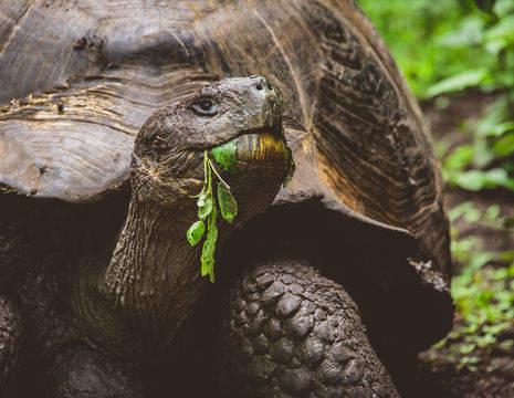 Schildpad op San Cristobal op de Galapagoseilanden