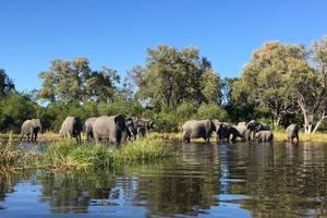 Botswana-Khwai-Olifanten