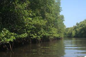 Nusa Lembongan: Mangrove Tour