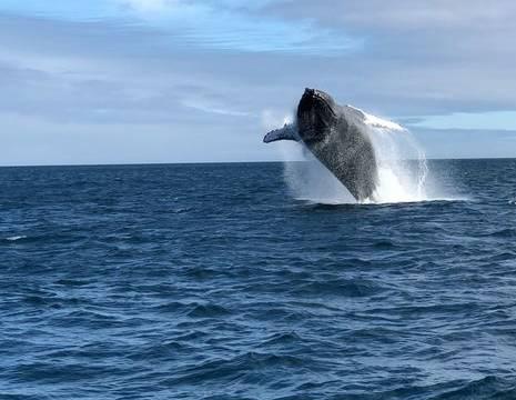 Ecuador-Puerto-Lopez-walvis