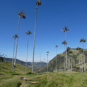 Colombia-Salento-Cocora-Vallei1_1_485013