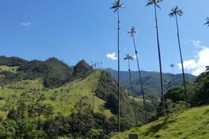 Palmenvallei Cocora, Salento en Filandia