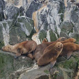 Argentinie-Ushuaia-zeehond