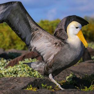 Bijzondere vogels zijn eenvoudig te spotten op Espanola, Galapagos