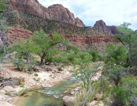 Verenigde-Staten-Zion-National-Park-beekje_1_548997