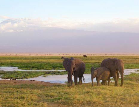 Kenia-Amboseli-Olifanten