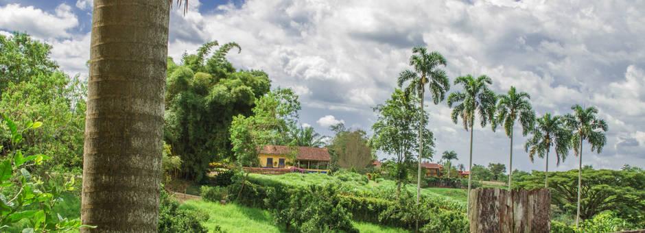 Groene koffie regio Quindio
