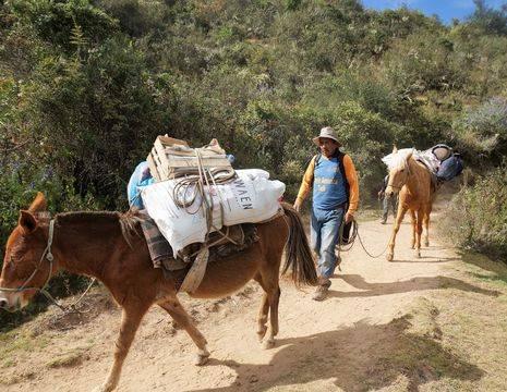 De muilpaarden dragen uw bagage in Peru