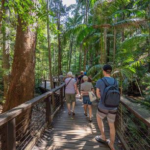 Australie-Fraser-Island-jungle_1_559394