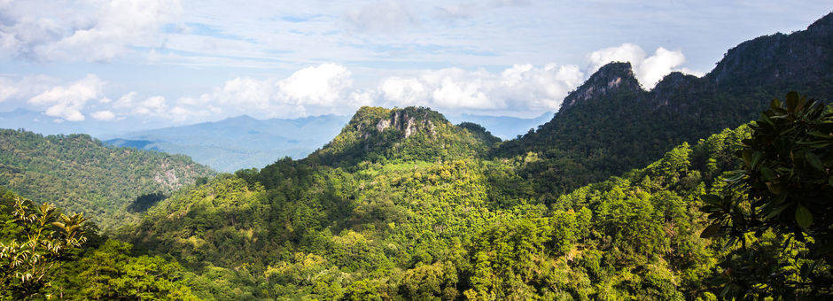 Thailand-noorden-dichtebossen shutterstock_353934179
