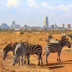 Kenia-Nairobi-Skyline-Zebra