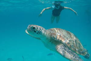 Zwemmen-schilpadden-Perhentian