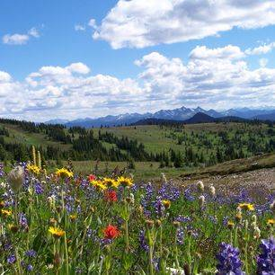 Canada-Manning-Provincial-Park-bloemen